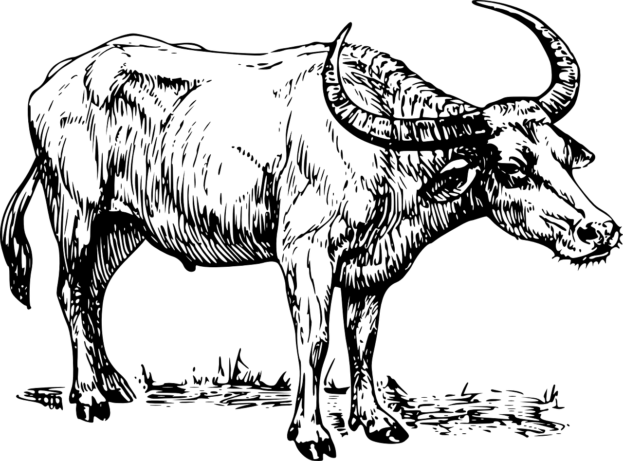 Photo of BOLEHKAH BERQURBAN 1 (SATU) EKOR KERBAU UNTUK LEBIH DARI 7 (TUJUH) ORANG?